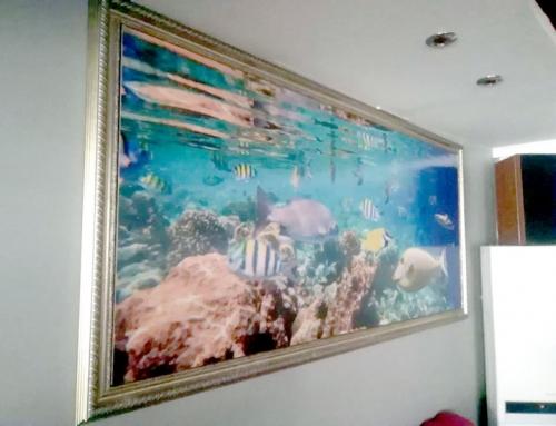 Maldives Indian Ocean coral reef